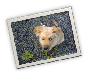 dog-calypso